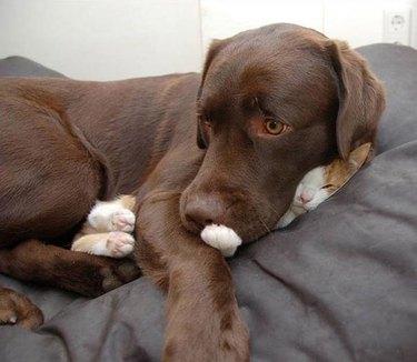 dog sleeps on cat