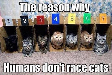 Seven cats in boxes not wanting to race