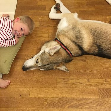 Little boy with Tamaskan dog