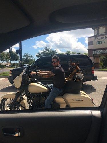Man in dark sunglasses driving motorcycle with German Shepherd wearing dark goggles.