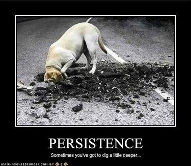 Dog appears to be digging through asphalt.
