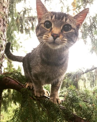 Small cat in a pine tree