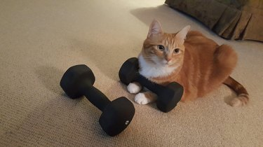 Cat sitting next to dumbbells.