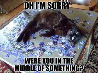 Cat sitting in puzzle