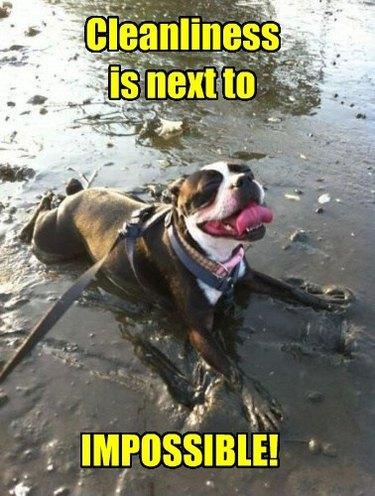 Dog lying in mud.