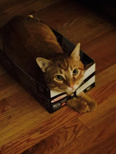 Cat in a shoe box with its paws stuck through a hole.