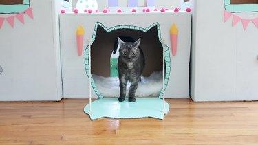 Cat on drawbridge