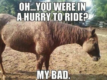 Very dirty horse.