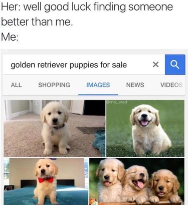 """Screen capture of dialogue. Her: well good luck finding someone better than me. Me: [screen capture of Google Image search for """"golden retriever puppies for sale.""""]"""
