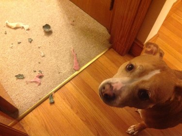 Dog next to shredded tennis ball.