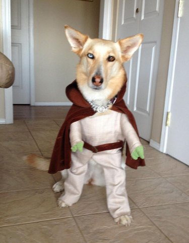 Animals Who The Force Is Definitely With