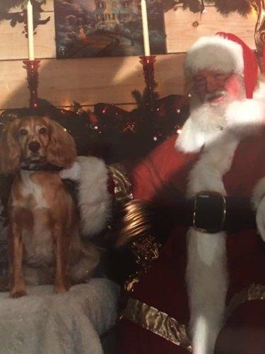 Dog sitting far away from Santa.