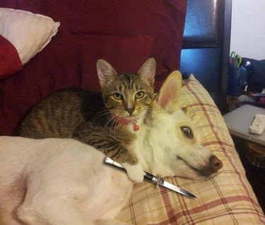 Cat holding a knife to dog's throat