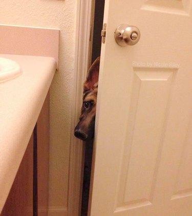 Dog pokes head into bathroom.