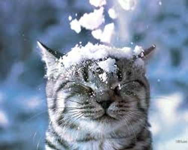 Animals Who Hate Winter