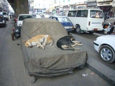 Two dogs sleep on hood of car.