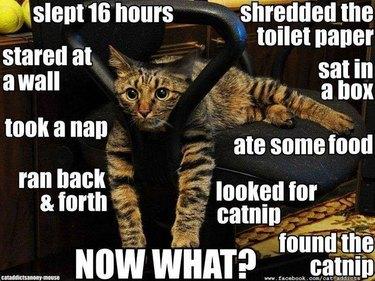 Lazy cat image macro