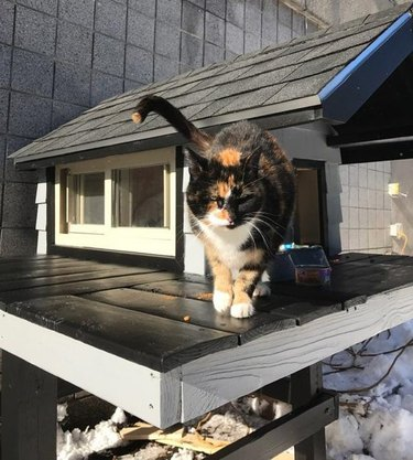Boston SWAT build chic cat condo for rescued stray