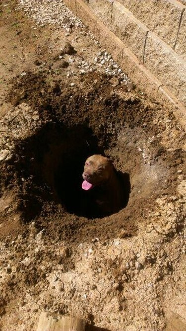 Dog sits in very deep hole.