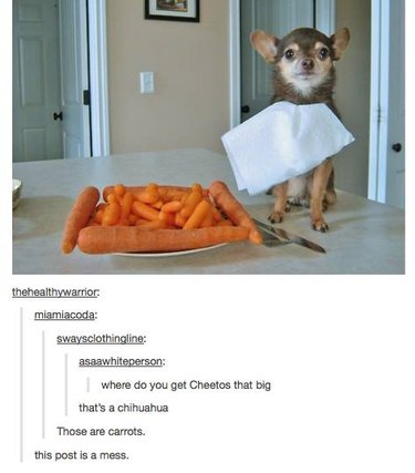 Puppy next to carrots
