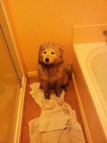 Dirty dog in bathroom corner.