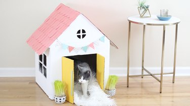 cat standing in cat house