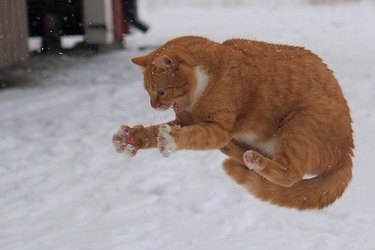 Cat trying to grab snowflake.