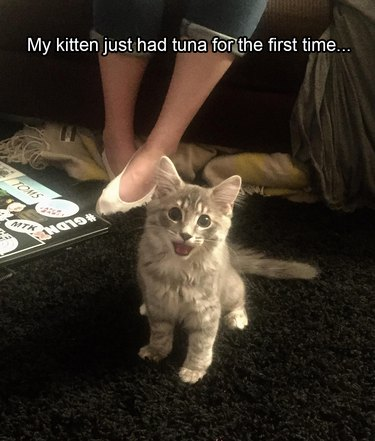 Excited kitten. Caption: My kitten just had tuna for the first time...