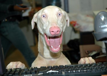 Excited dog.