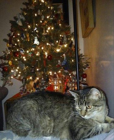 Cat underneath tree