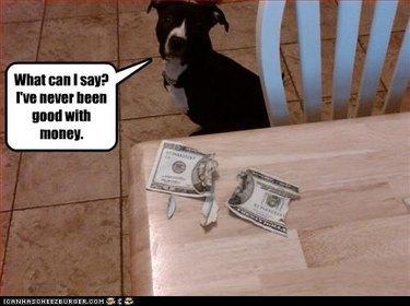 Pit bull next to chewed up twenty dollar bill.