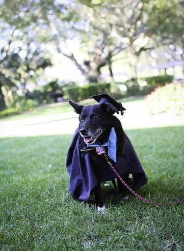 Florida college honors companion animals with graduation ceremony