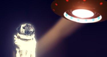 Pug and UFO
