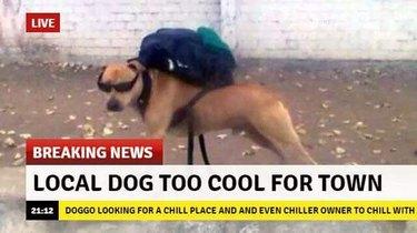 20 Awesome Pet Photos Guaranteed To Make You Laugh Every Time