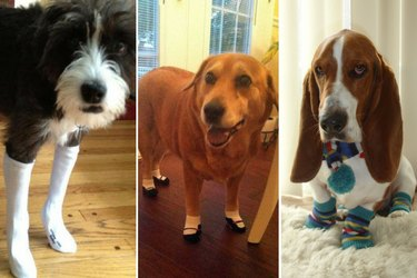 Just 15 Photos Of Dogs In Socks, NBD