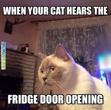 When your cat hears the fridge door opening.
