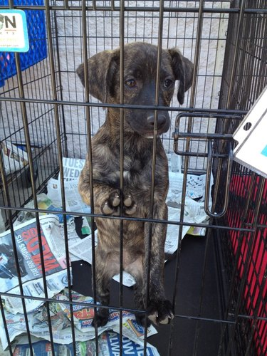 Pets Who Are So Eager to Be Adopted
