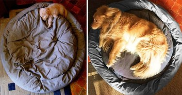 21 Animals Who Have No Idea How Big They Are