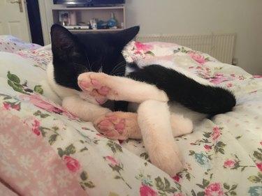 Kitten sleeping in a weird pretzel formation