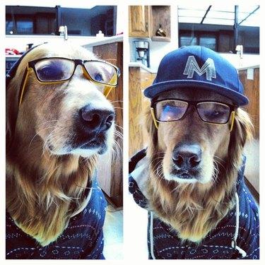 golden ret-hipster
