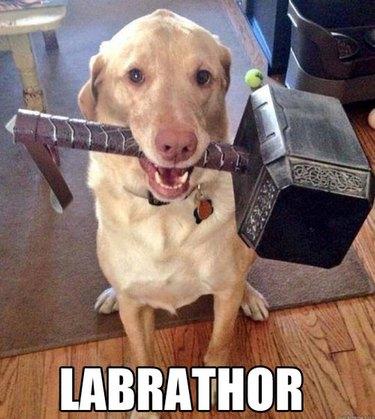 Dog holding Thor's hammer.