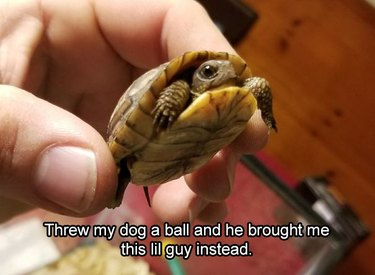 A very small turtle.