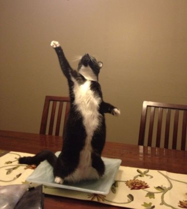Cat in dramatic pose.