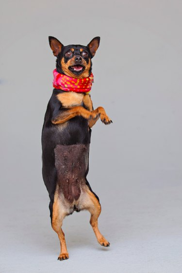 These Shelter Pet Photoshoot Bloopers Are Unbelievably Adorable