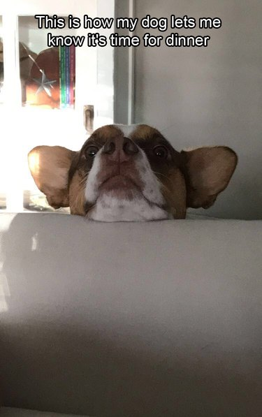 Dog resting its chin on back of couch