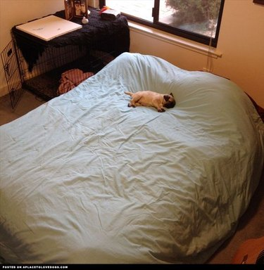 Dog on big bed