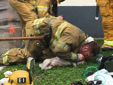 California firefighter saves dog with mouth-to-mouth resuscitation