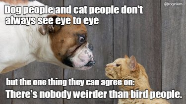 Dog people and cat people don't always see eye to eye, but the one thing they can agree on: there's nobody weirder than bird people.