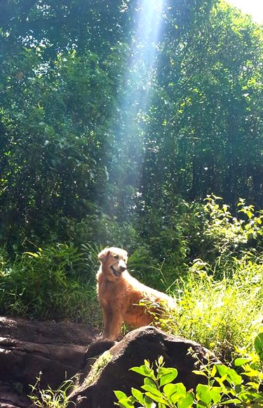 Dog in woods underneath ray of sunshine