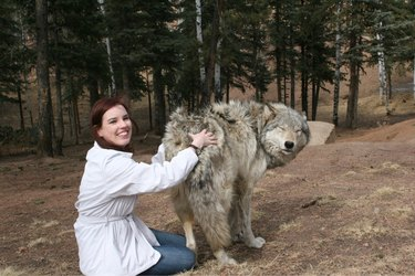 Lady scratching a wolf's butt